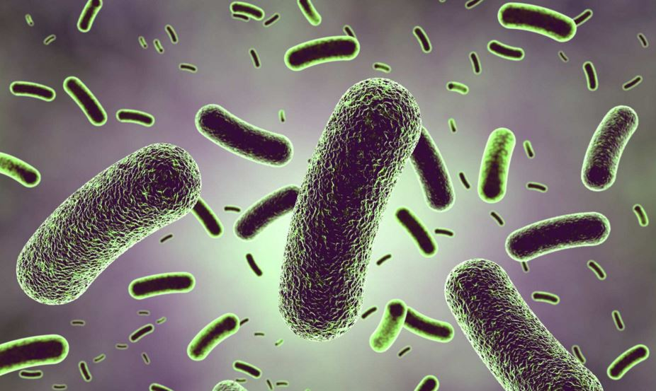 lactobacillus Rhamnosus probiotic supplement