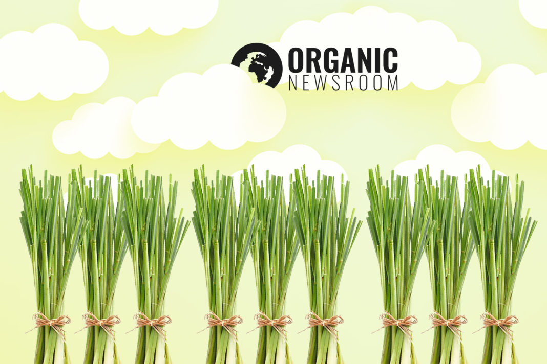 Benefits of Lemongrass Banner Organicnewsroom