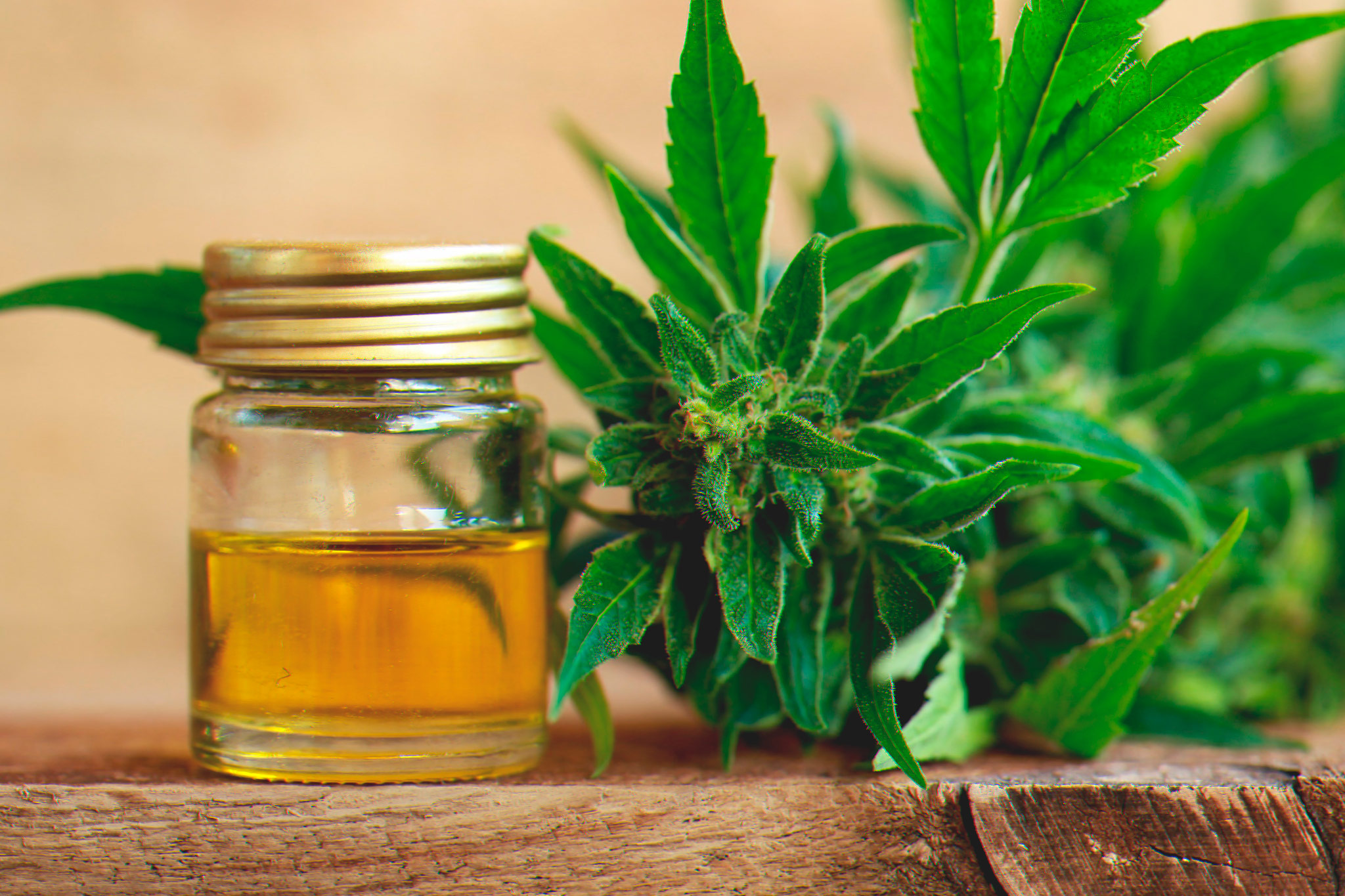 CBD Oil Benefits Organicnewsroom