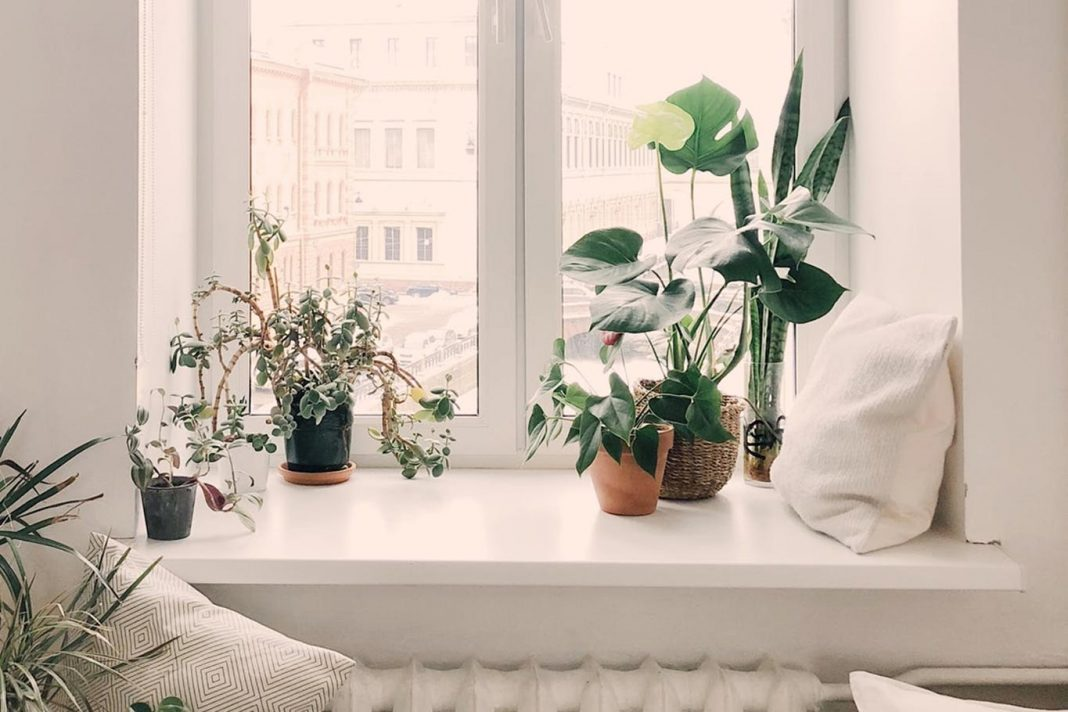 eco-friendly-room-ideas