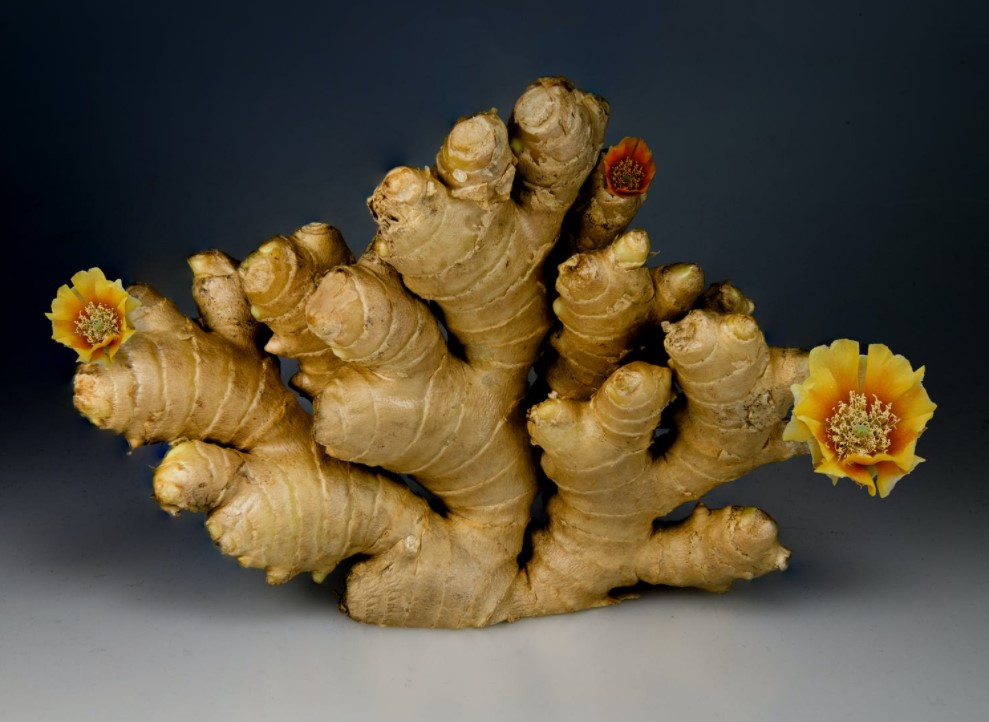 organic-ginger-root